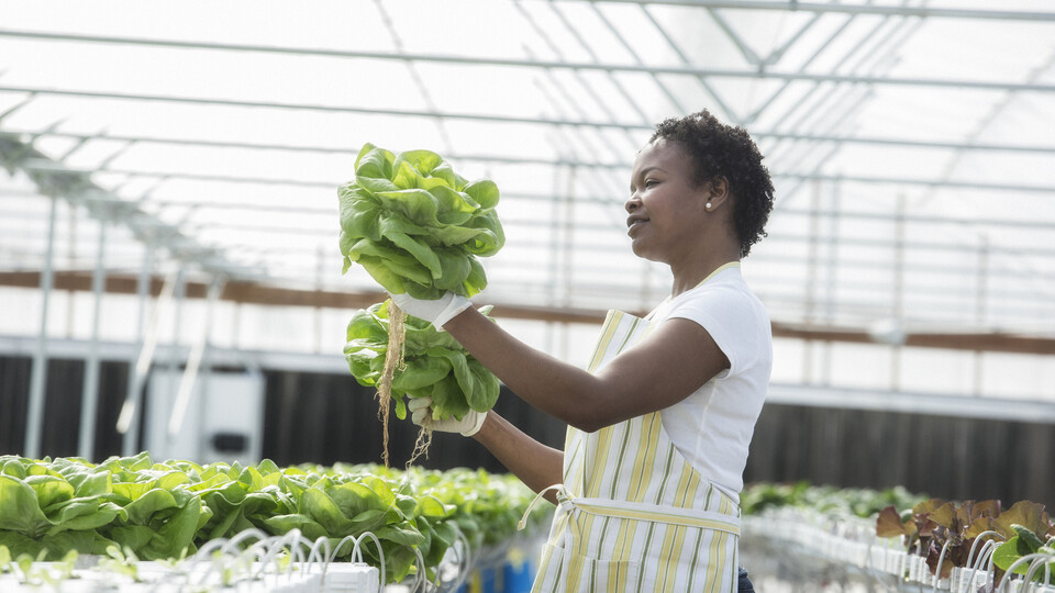 Woman working in greenhouse. GRODAN, Green, Horticulture.